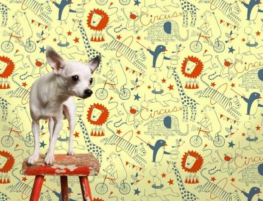 circus-dog-slider